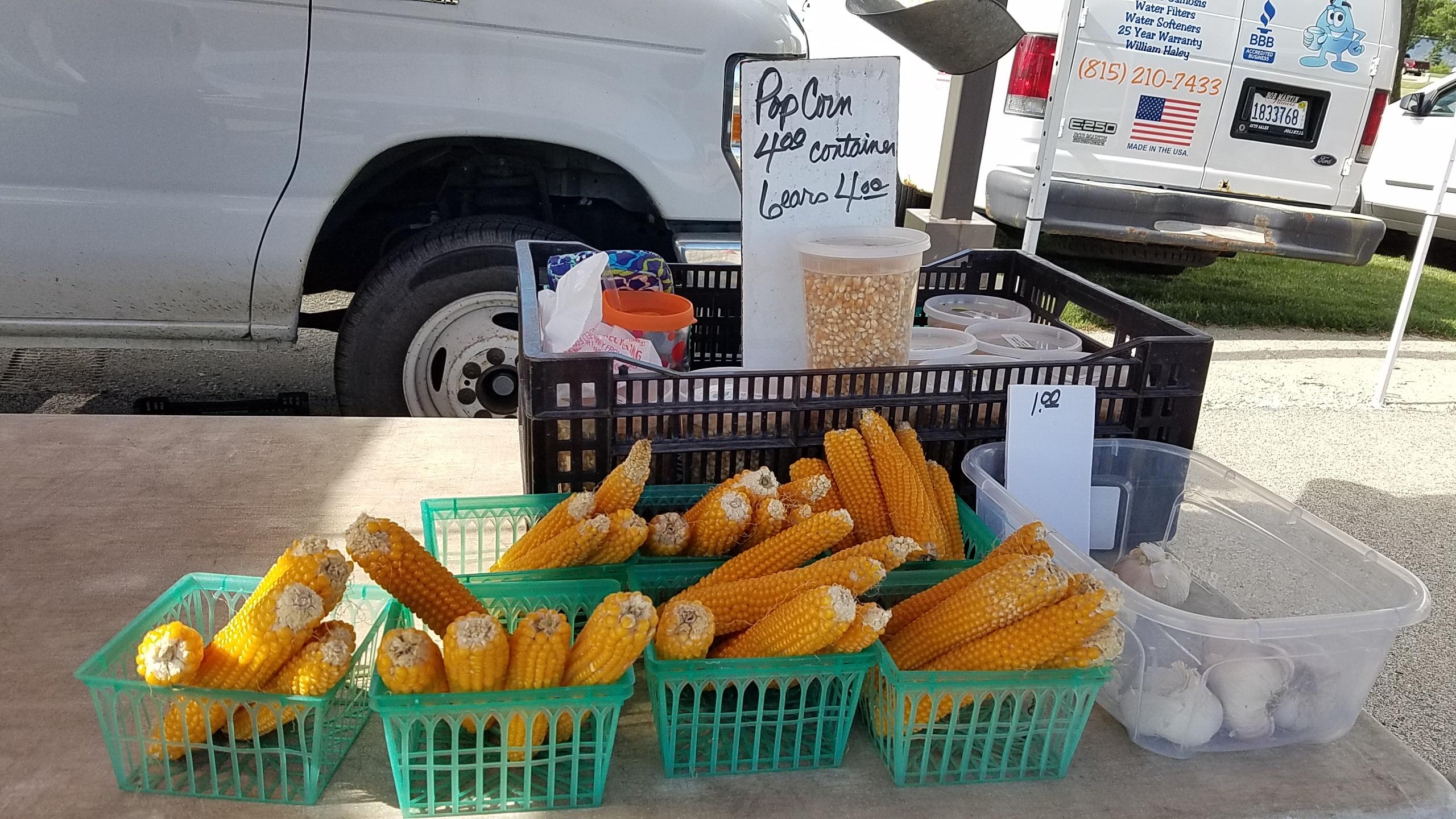 8 great finds at the jjc farmers market joliet junior college lange's family farms, llc popcorn on the cob