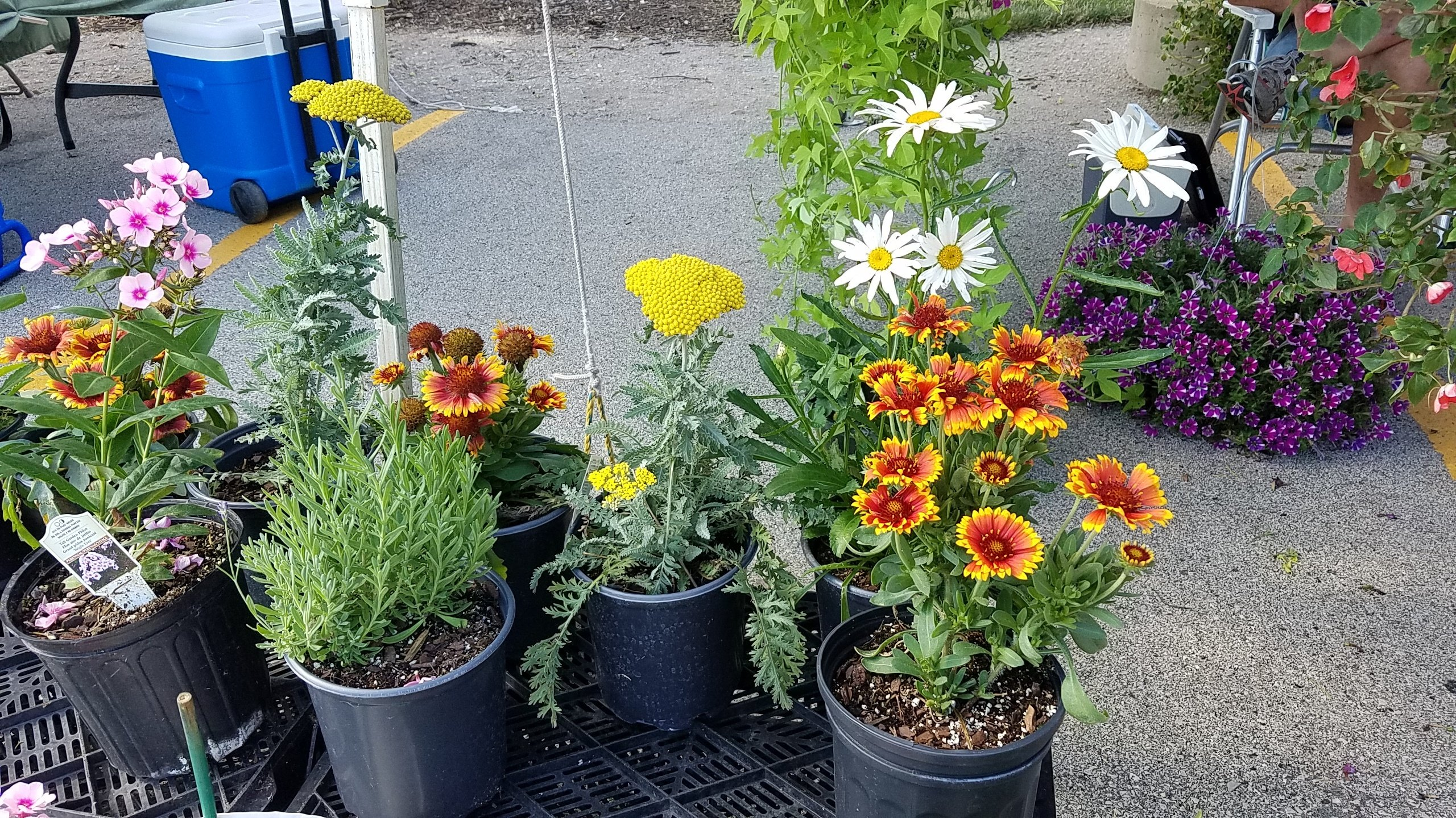 8 great finds at the jjc farmers market joliet junior college sunset growers flowers