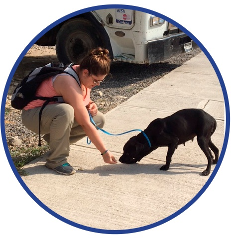 JJC Vet Tech Belize
