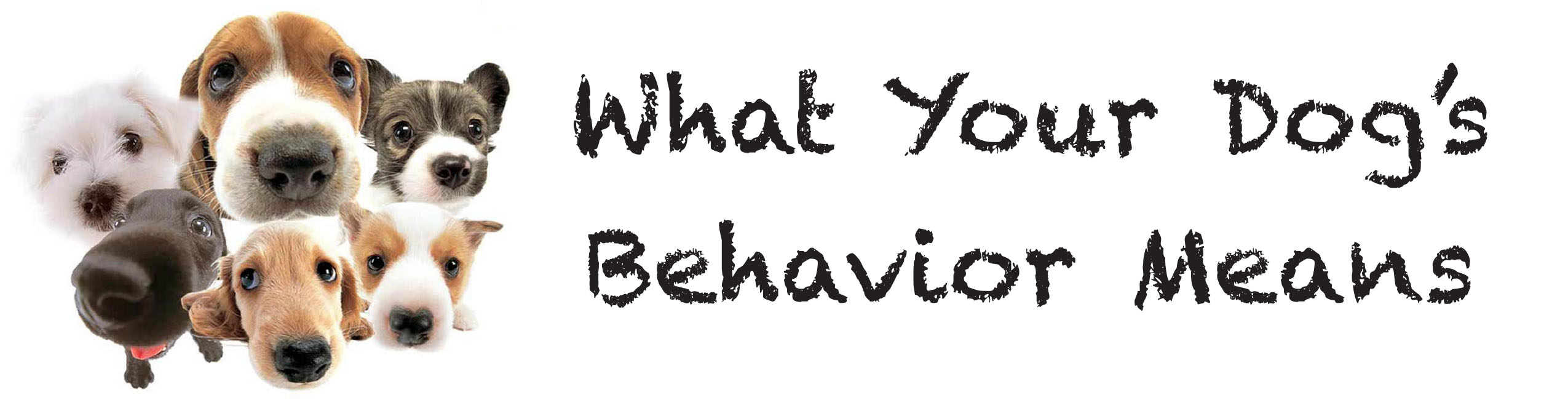 What Your Dog's Behavior Means JJC