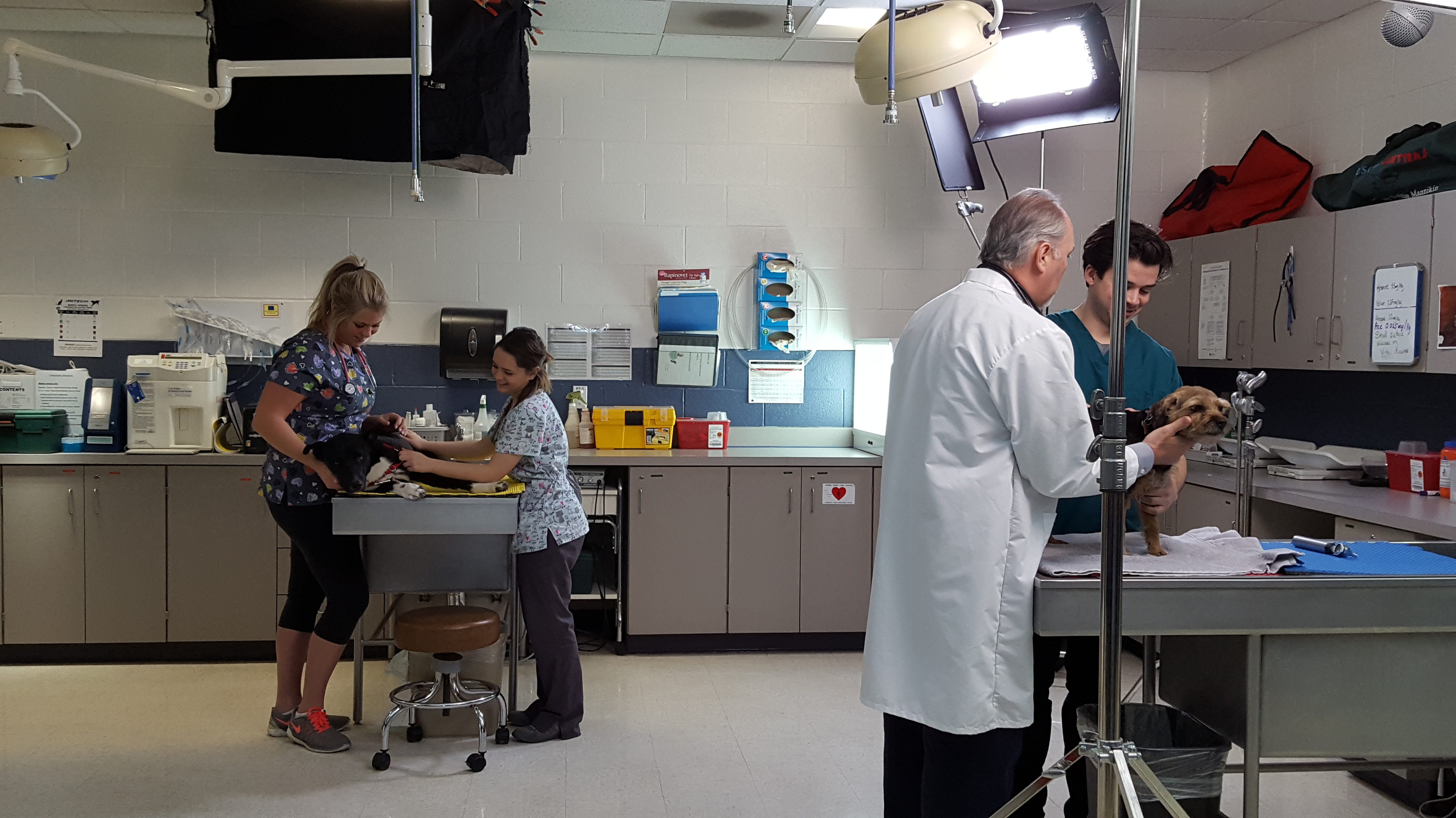 vet tech behind the scenes look jjc commercial dogs students