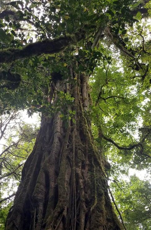 costa rican tree jjc joliet junior college students study abroad in costa rica