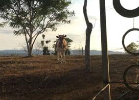 la gran vista agroecological farm jjc joliet junior college students study abroad in costa rica