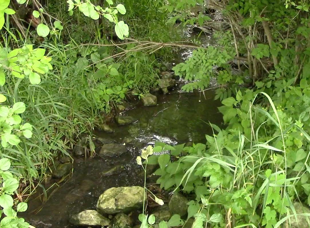 5 things to spot on jjc's nature trails jjc joliet junior college fen