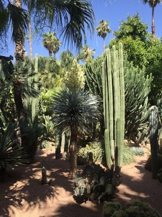 jjc students study abroad in morocco marrakech majorelle gardens joliet junior college
