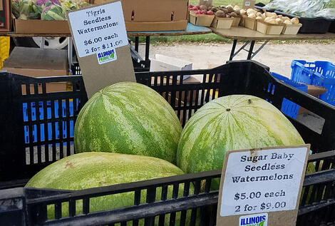seedless watermelon 8 great finds at the jjc farmers market joliet junior college six generations farmin local, inc. 6