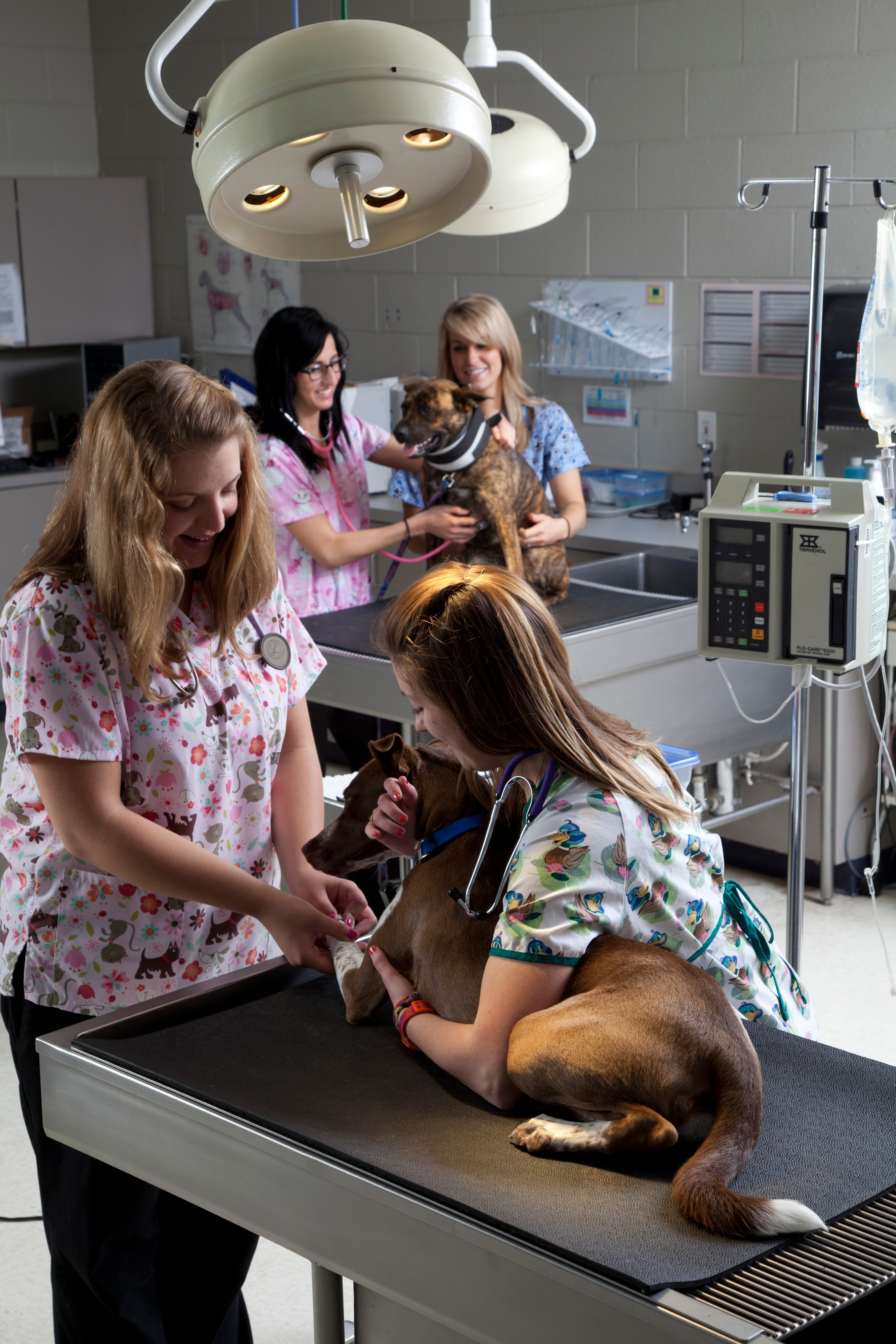 7 superhero-like jobs you can get with a jjc degree superhero joliet junior college veterinary technician