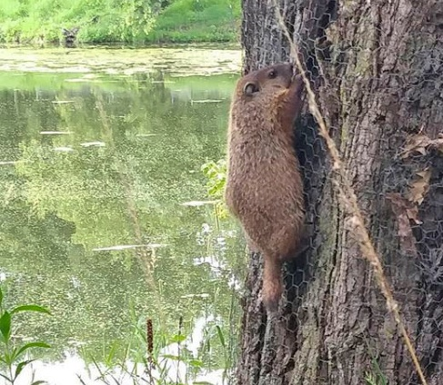 5 things to spot on jjc's nature trails jjc joliet junior college wildlife