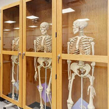 10 instagram worthy shots around campus . jjc joliet junior college skeleton natural sciences labs